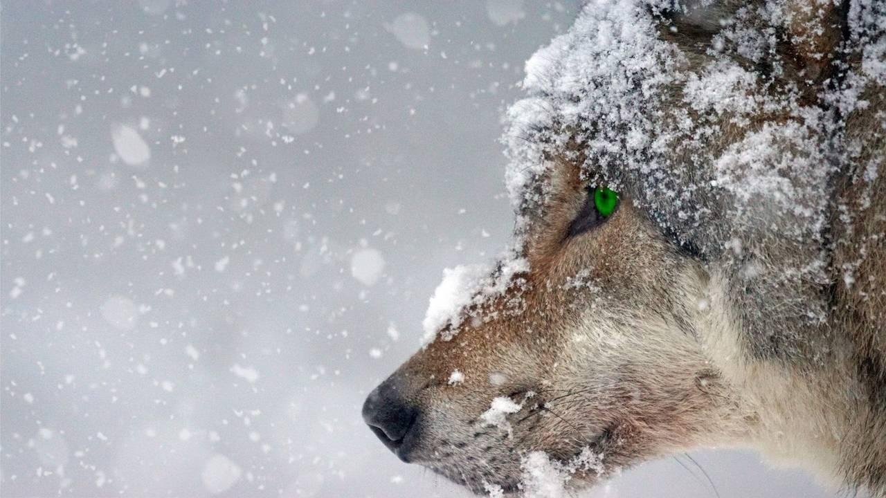 animal-carnivorous-cold