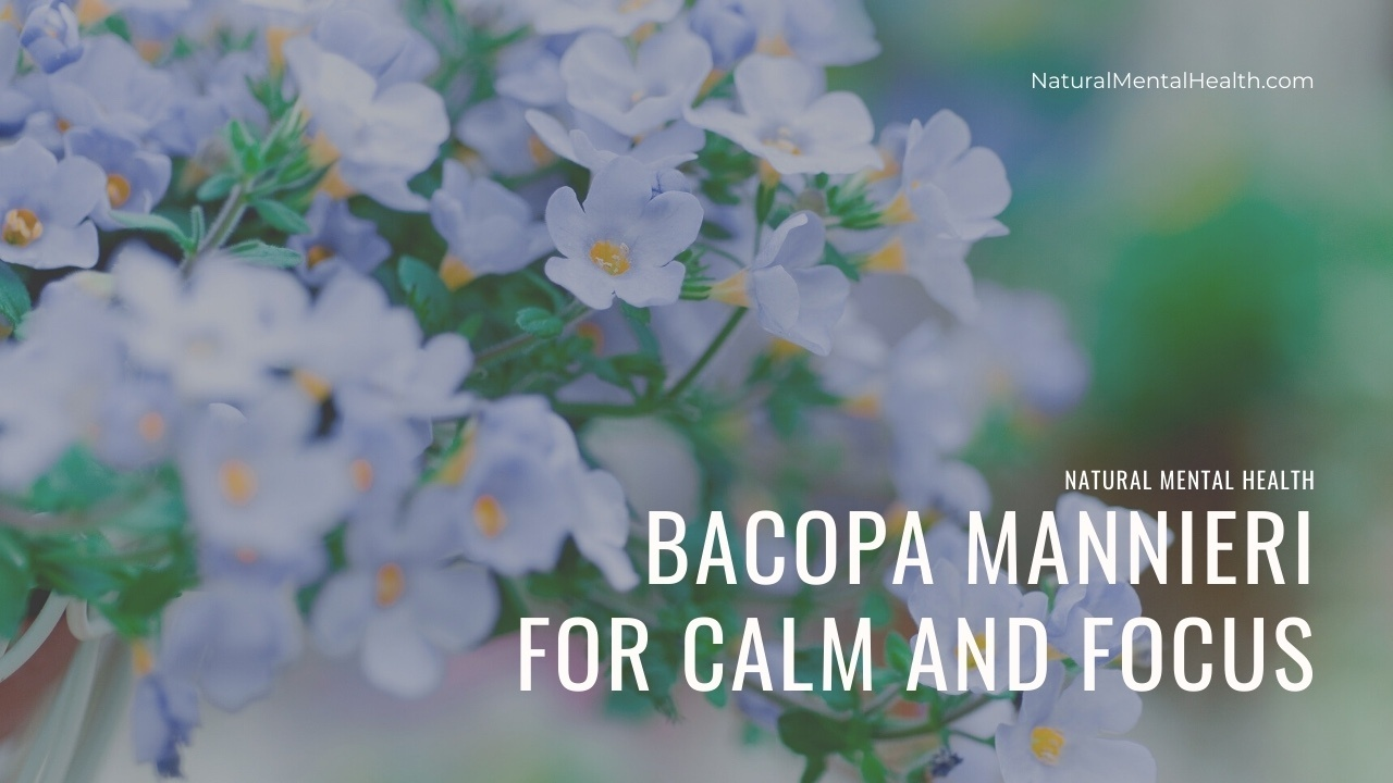 The photo shows a close up of a bacopa mannieri plant. Text reads Bacopa Monnieri for Calm and Focus