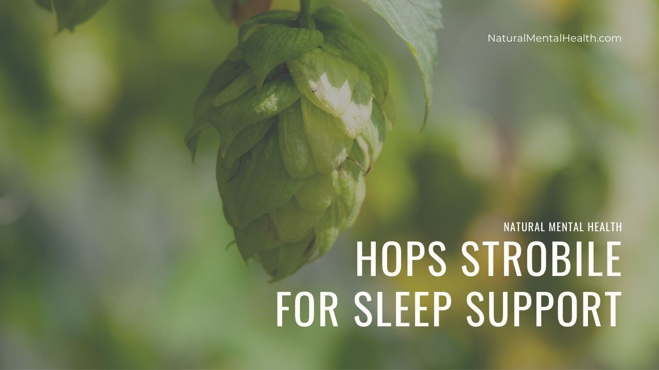 Green hops plant in nature. Text reads: Hops Strobile for Sleep Support