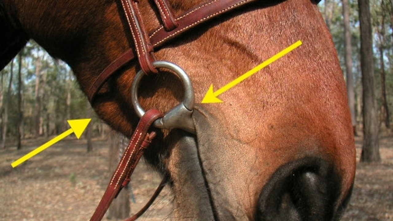 Equiculture - the ESSENTIALS of fitting horse gear...