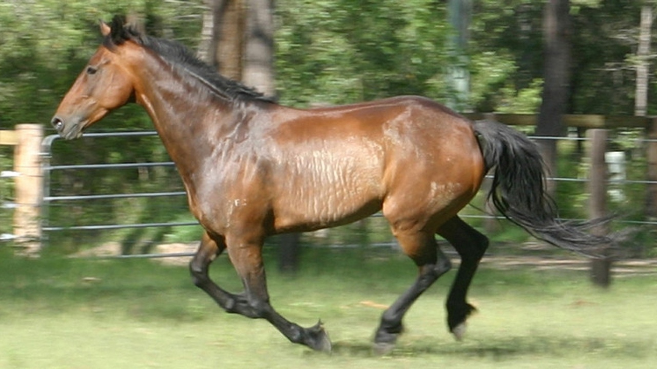 Equiculture - what is essential exercise