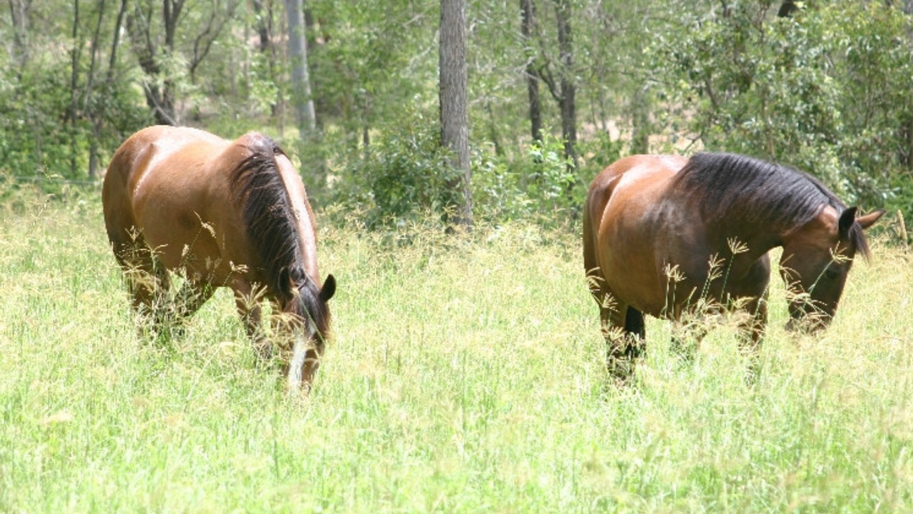 Equiculture switching to grazing longer grass plants