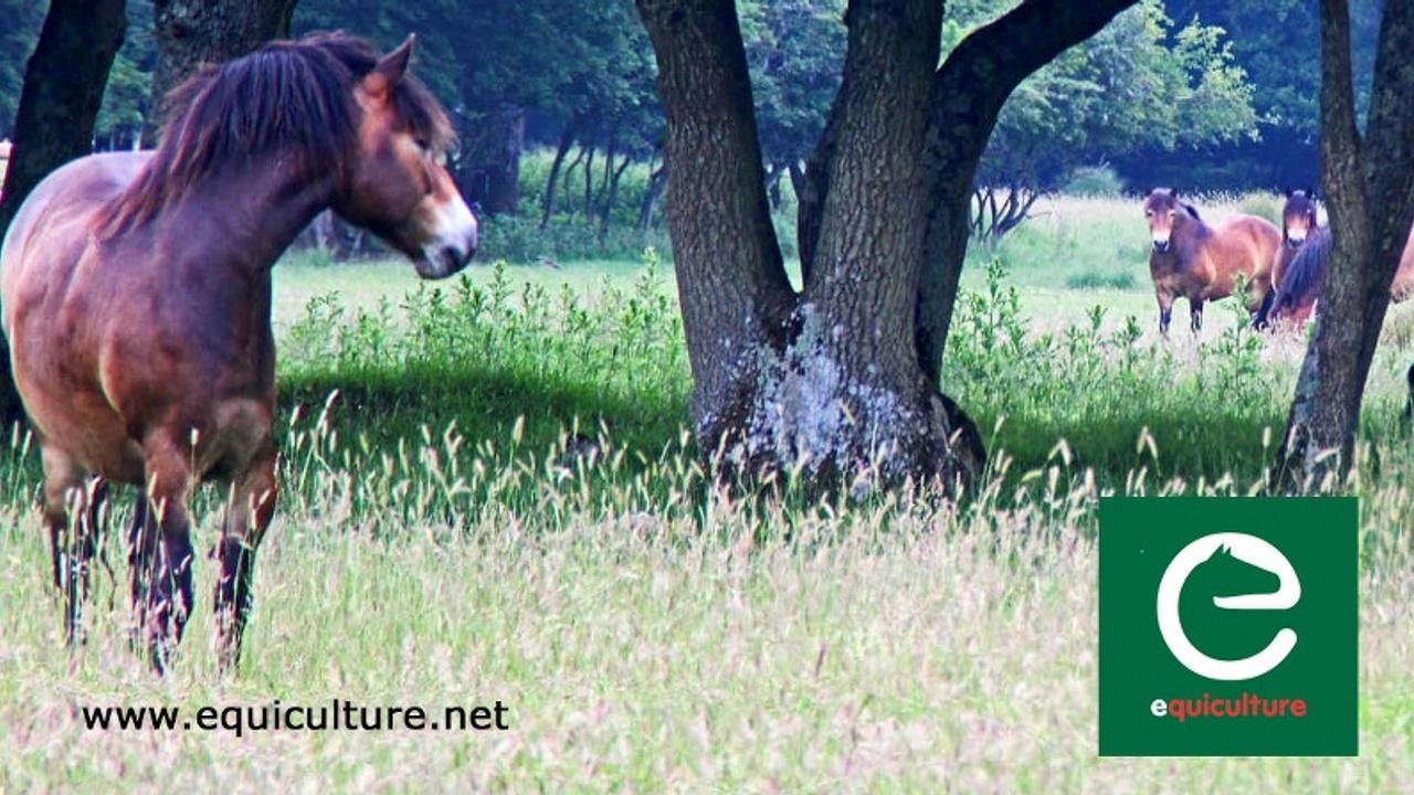 Equiculture Knepp Castle talk