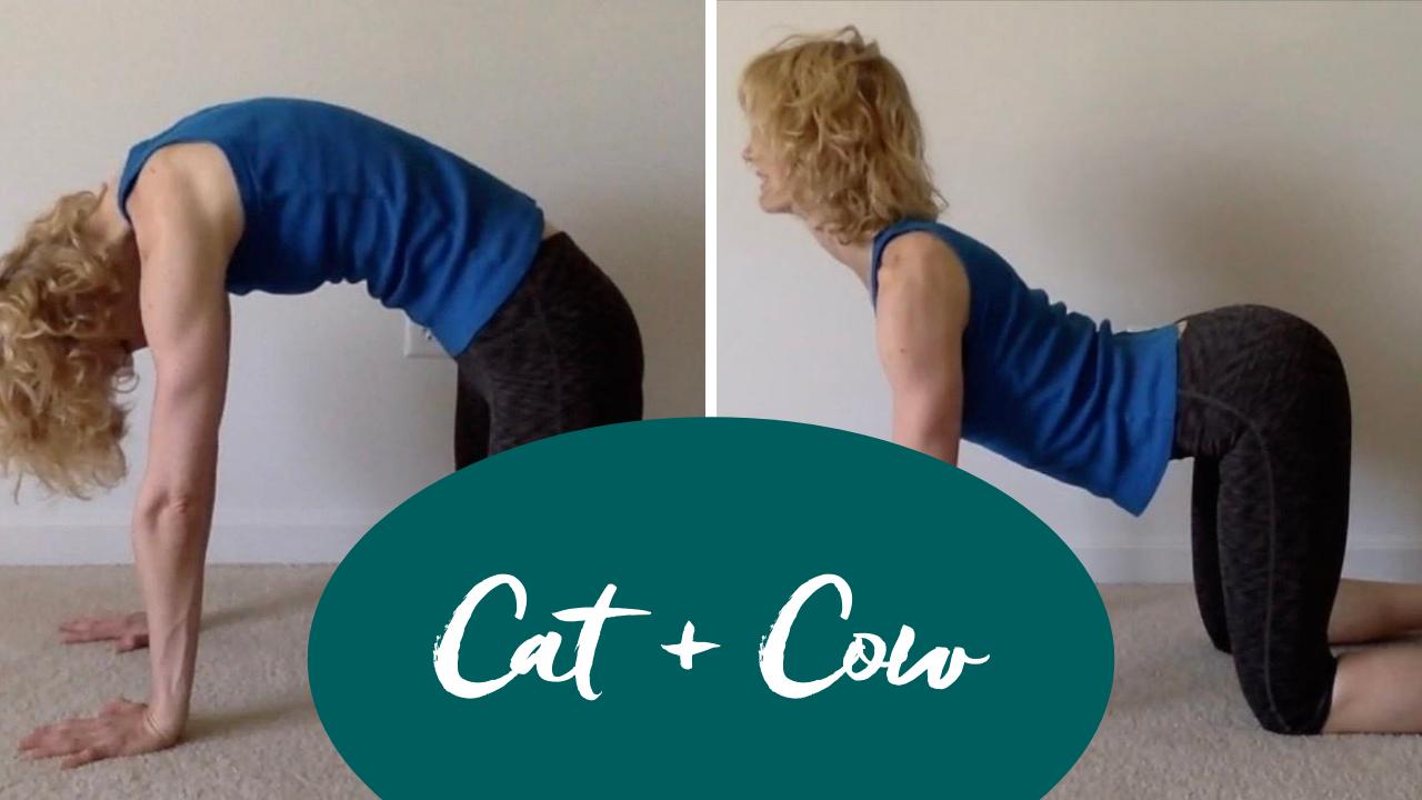 cat and cow pilates progression