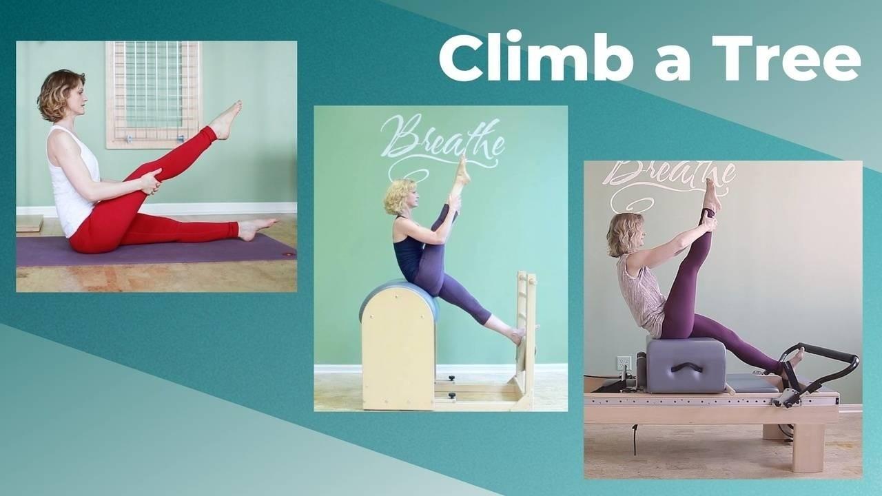 Climb a Tree Pilates Reformer, Ladder Barrel, mat