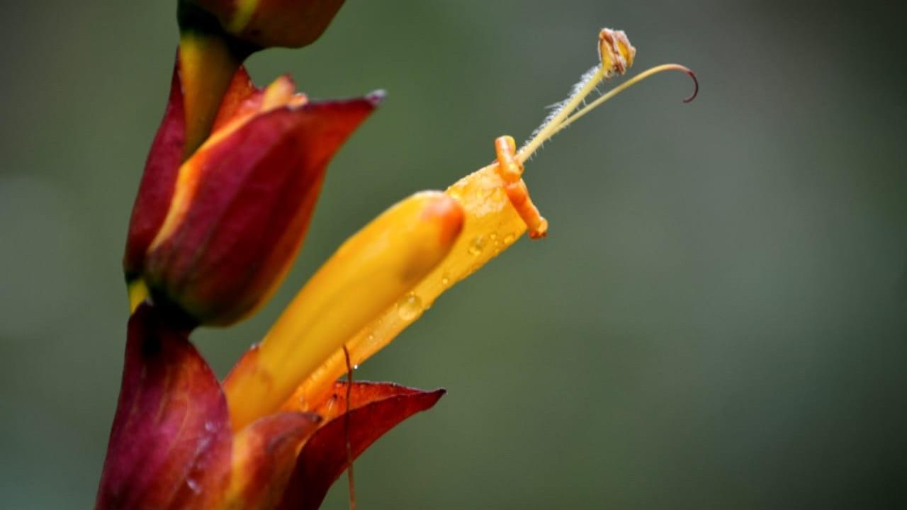 Ywze5mucqpmeevyiarfz plant
