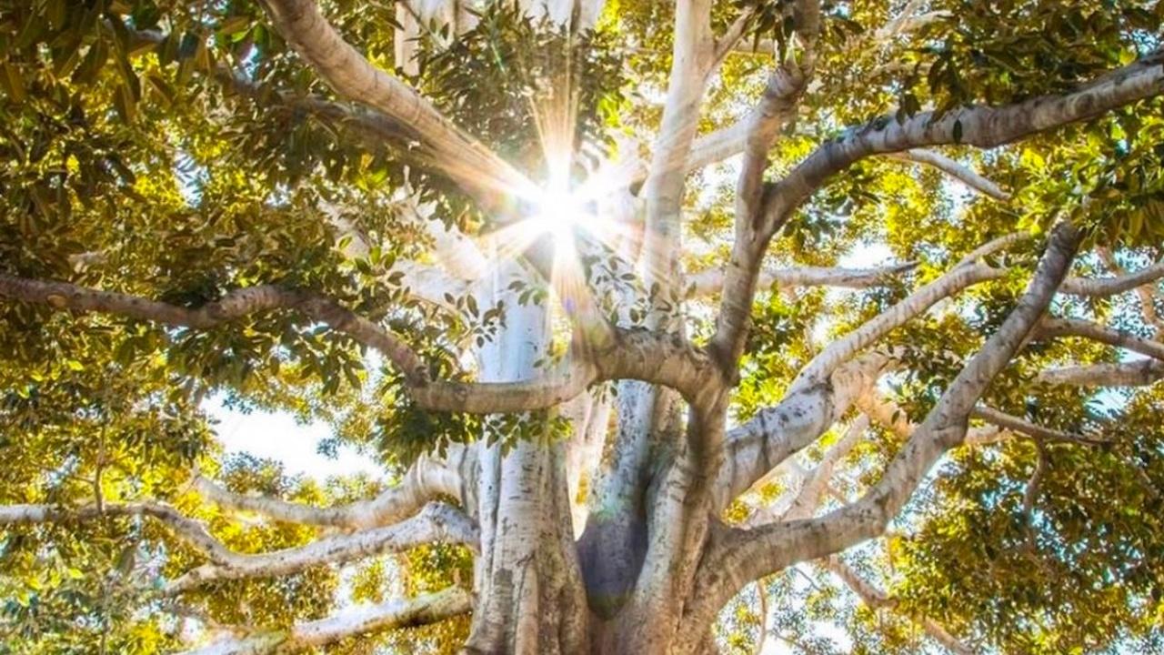 Ug8uwx4szeyiqcmkf5qv tree