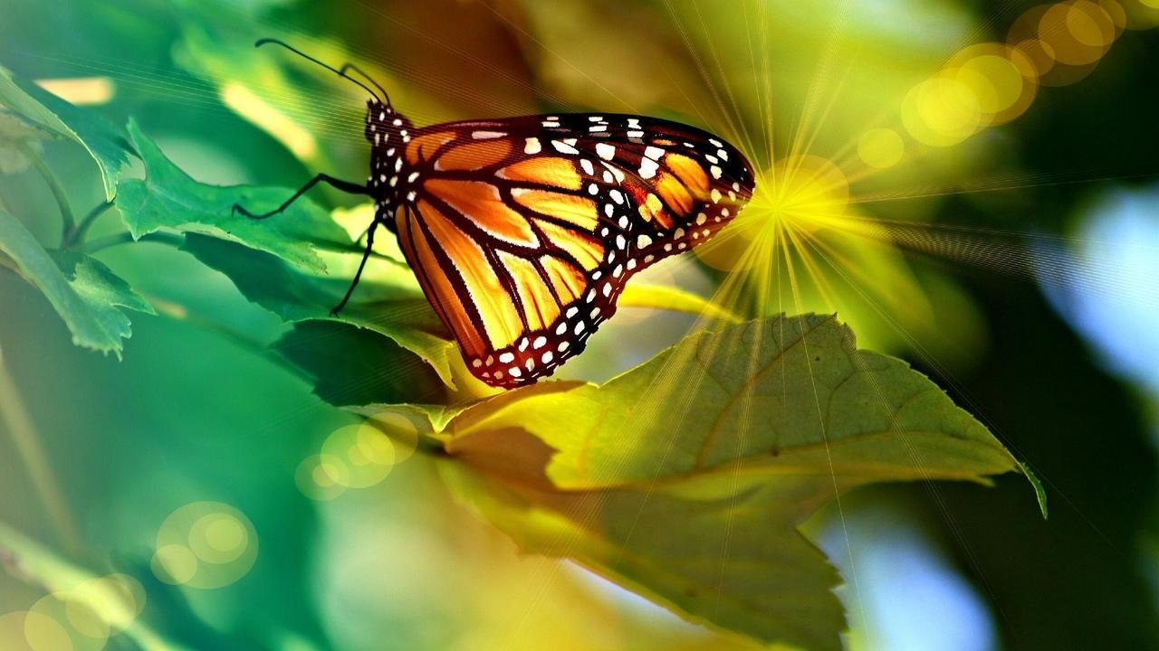 Z1csfiwkspidtowgiiff monarch 4335443 1920 1