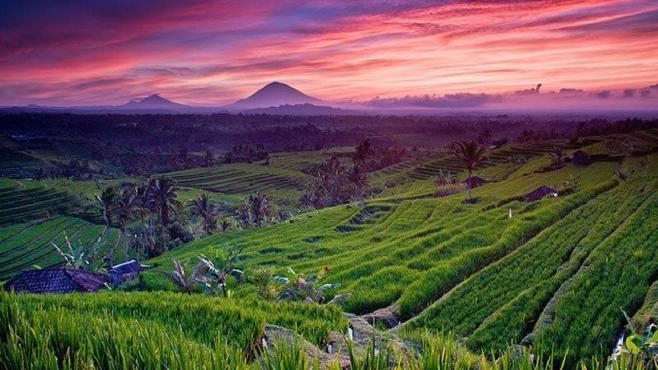 Gkarpmvsimuikeptwmdb hclw77bwtbsihwezae8j rice fields bali jatiluwih rice field sunset