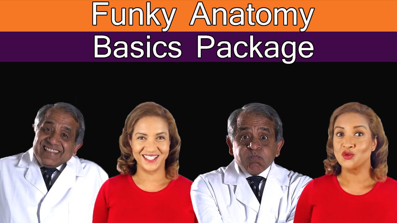 Kkclmvq7rkgj2fon72mf funky anatomy basics package 1