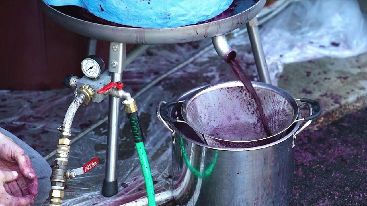 Fwqc8vjvtlcy4puojtkx pressing grapes