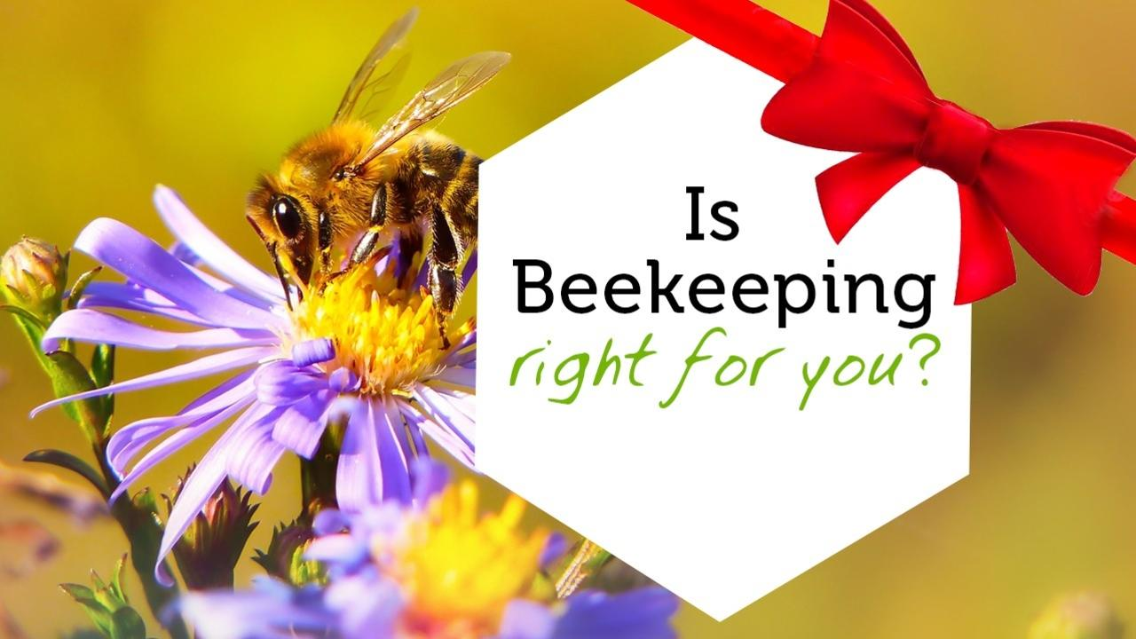 V7ej0rsnqb6furtcfu7v is beekeeping rightproductimage gift