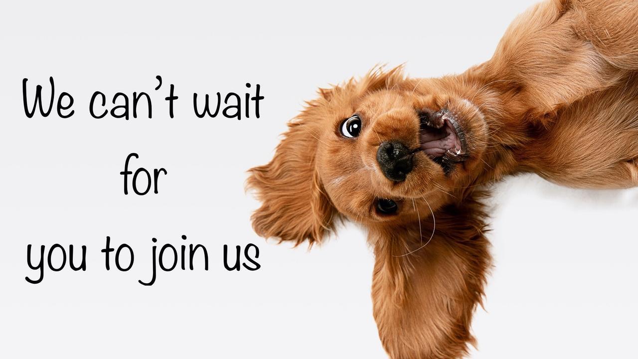 Edk7dbitrcu0btz2trpk funny dog join