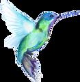 Ht6llnprqaq3rvqcohxb hero 0000 hummingbird