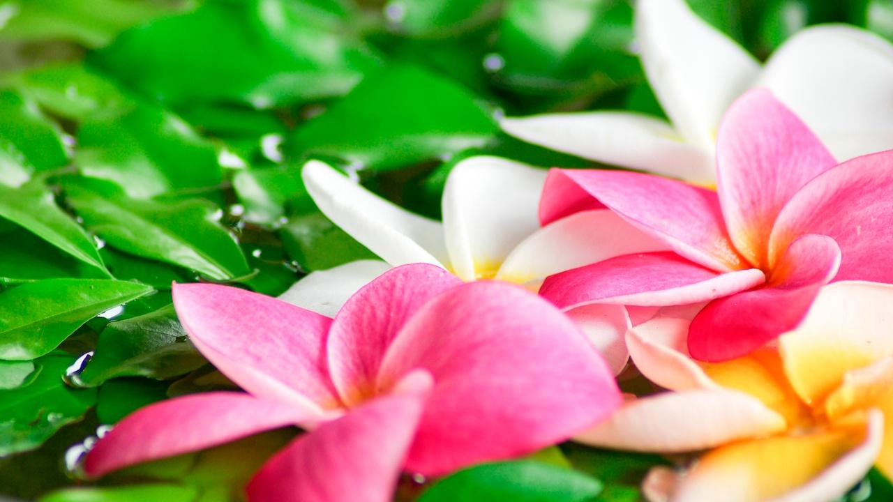 0panesskrowcjjpvrrt8 flower spa massage on water bpce0g hzl
