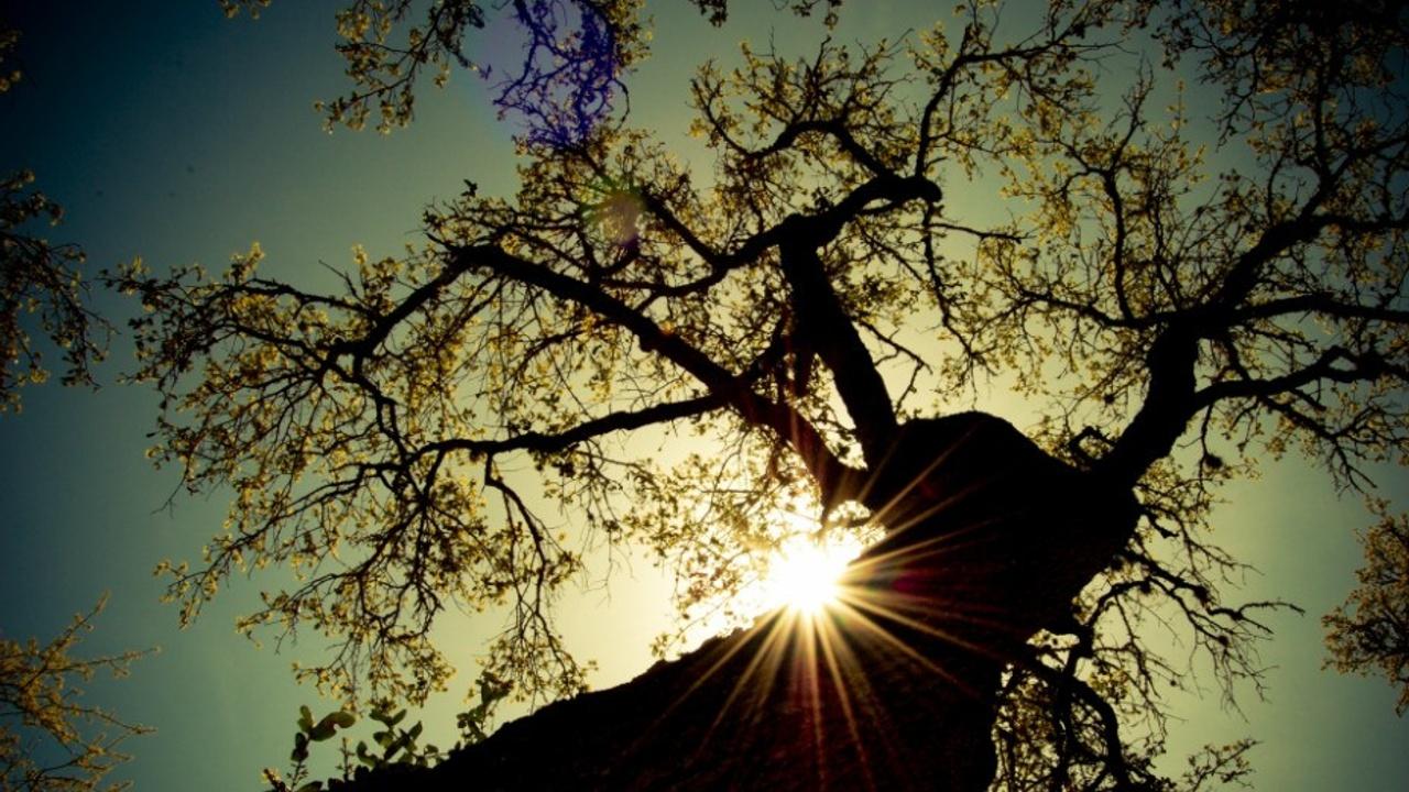0ceyxgtjrimpldkwmhr4 tree