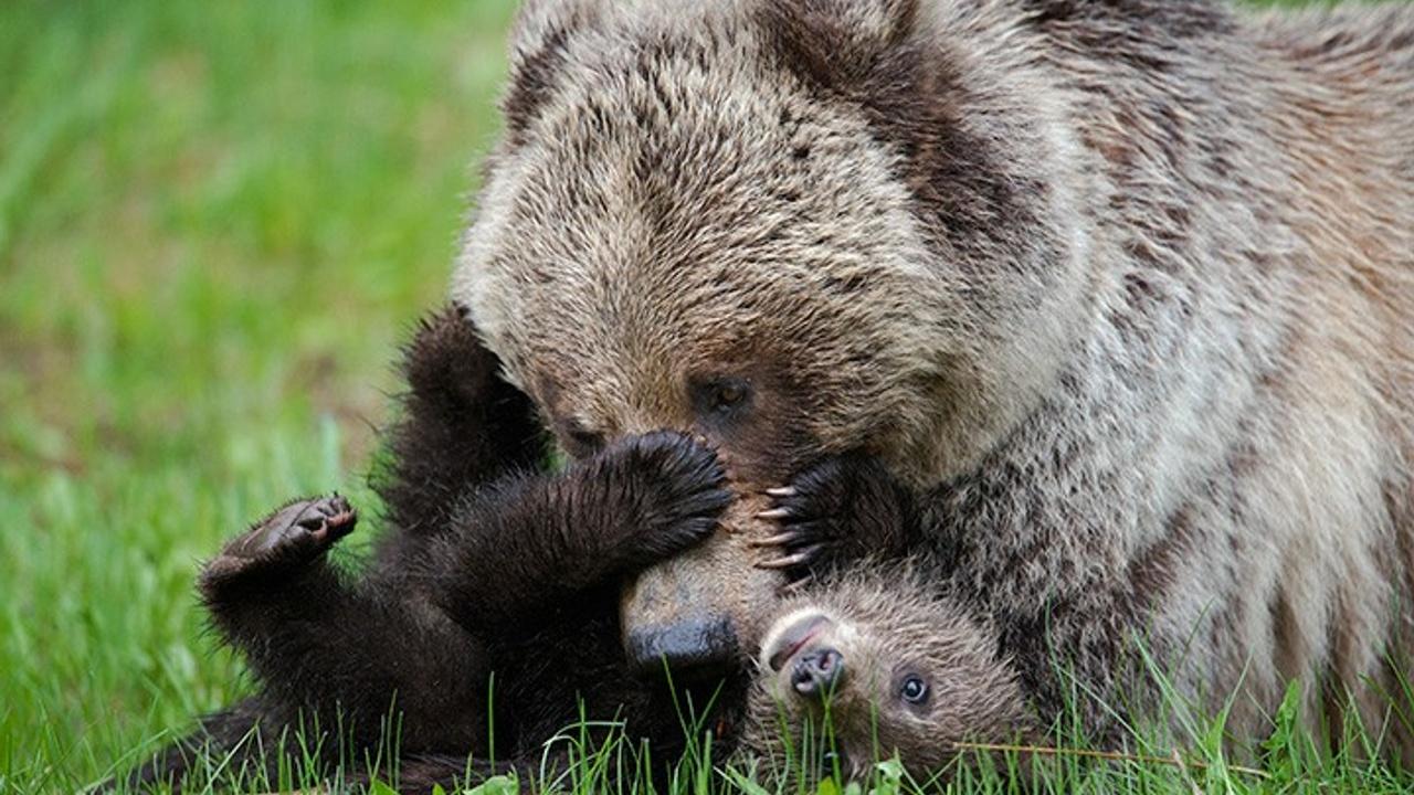 Py1u0gdgrxmgt0zn0vao everyone needs a bear tickle
