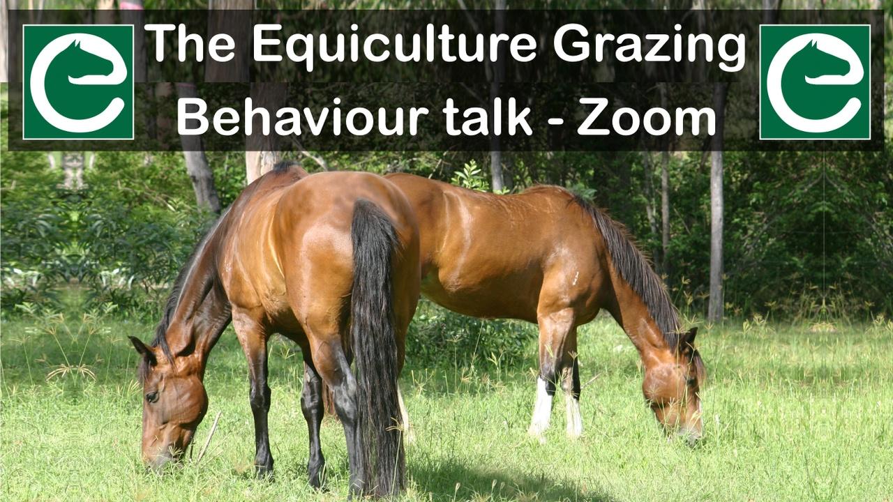 Gjkrlbfgsjmrpbfddgxa graz behav talk zoom