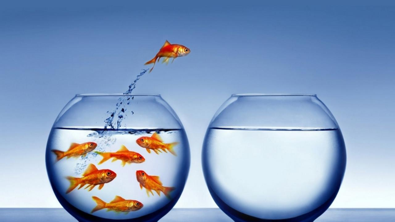 Vq8gbfstty6dqagmqjwh fish jumping ship