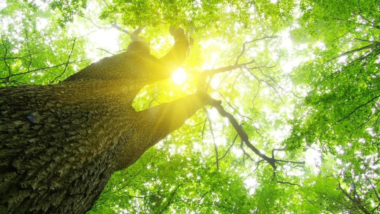 Plkmgkjjqtelgelc8a7o tree light