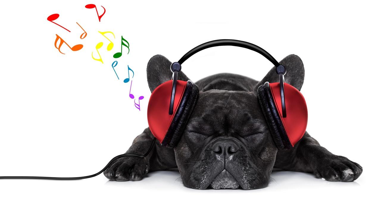 Urrqxyypq6cdyxo7cpan 081075198 dog music