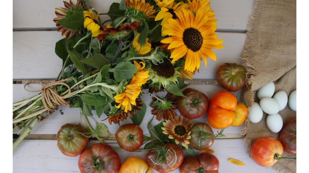 1jotrjzrtc7ooysthizg flowers tomatoes 1920x1080