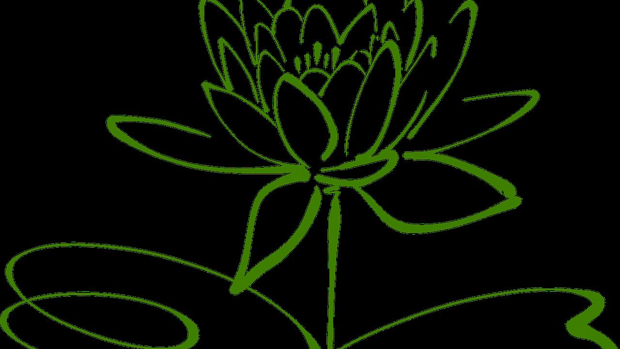 Bn8g9t1eqbkzu3xnon8j lotus blossom 304876 1280