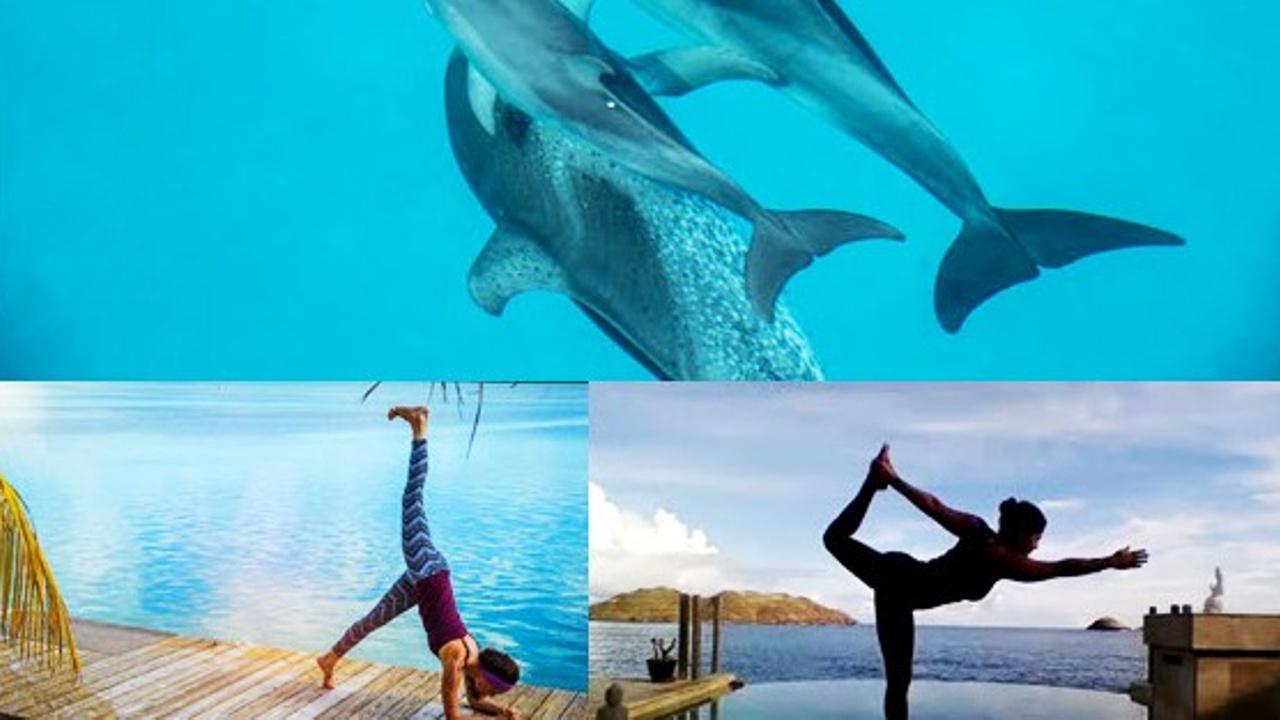 5rentsysdk0w4mephuog dolphins ly ker