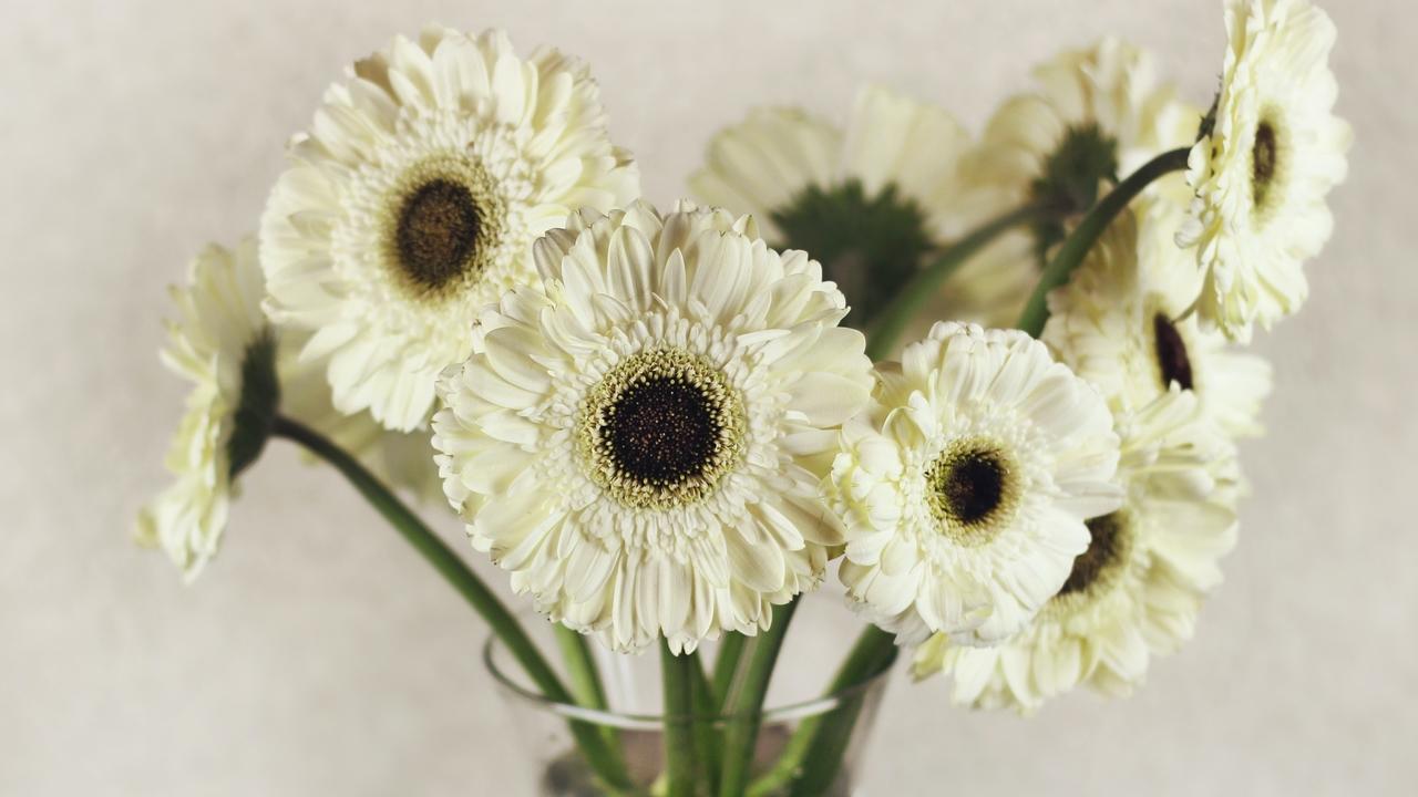 Dsfasxnftghyoezooamx dozen daisies