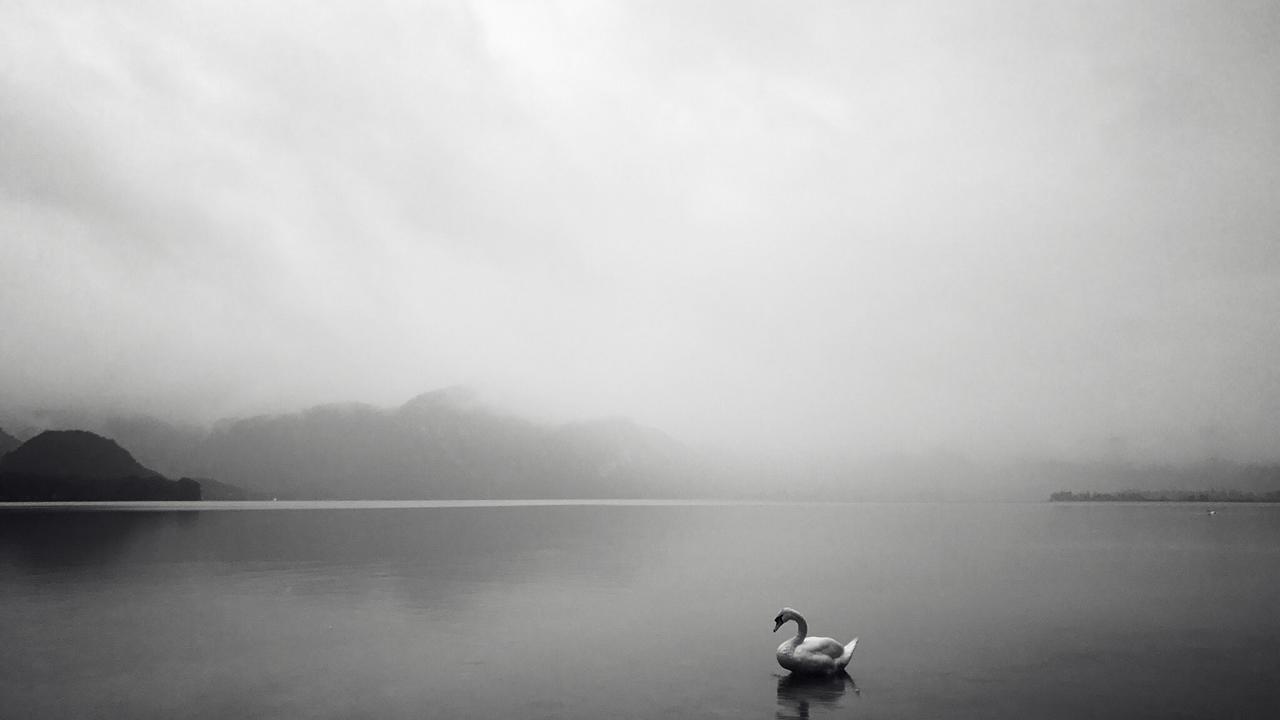 Dqtguvettk2iafvkbnqe swan in stillness