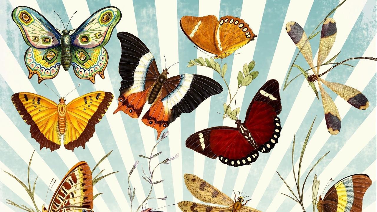 Ecbqwhbbshahkgpy4shv butterfly 1064147 1920
