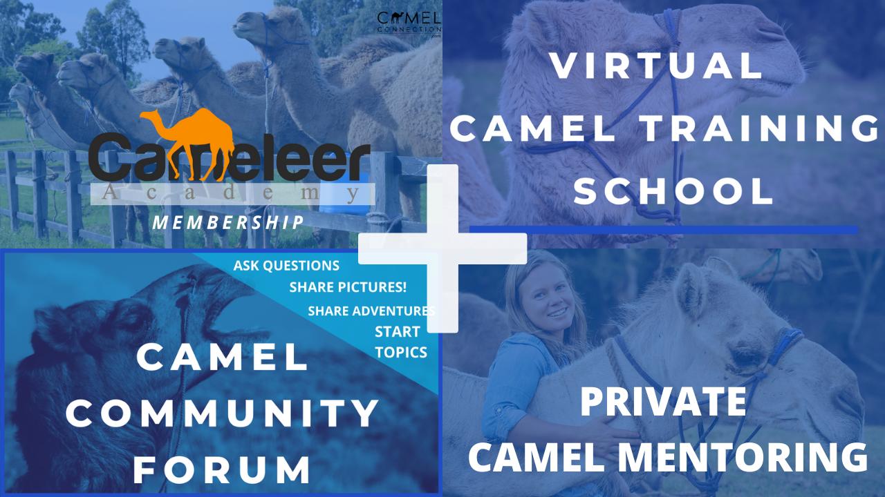 Mbjalzzatg2ks07yo9xn private camel mentoring 2