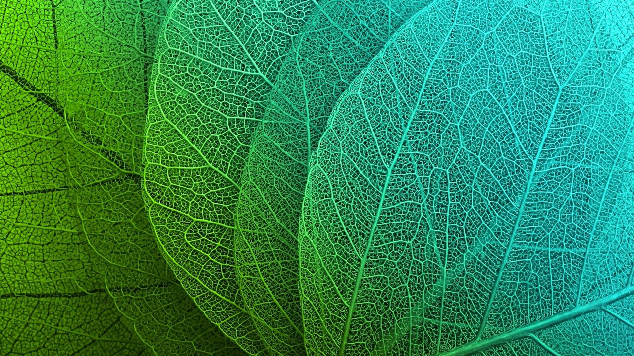 U6rkwjymtowzmkxfvw79 leaf at 3.29.44 pm 2
