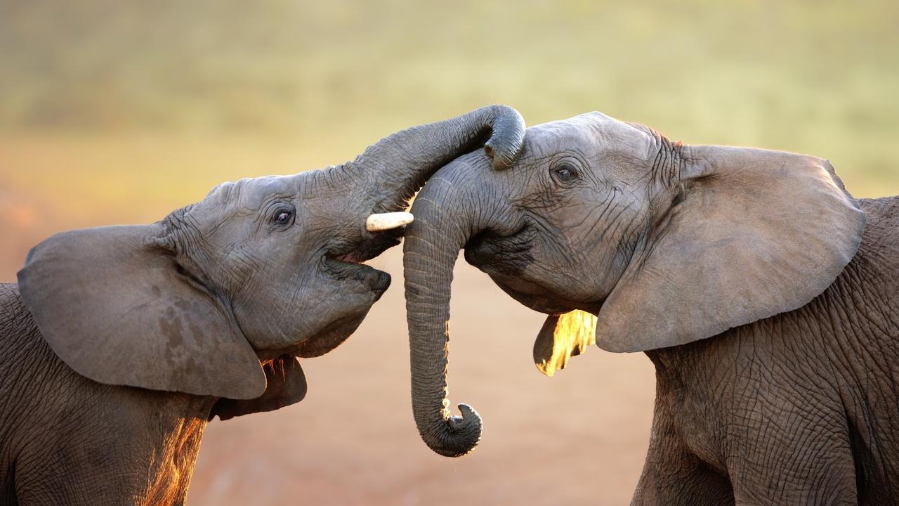 Sdpnt201ttgpkvhpqsej elephants