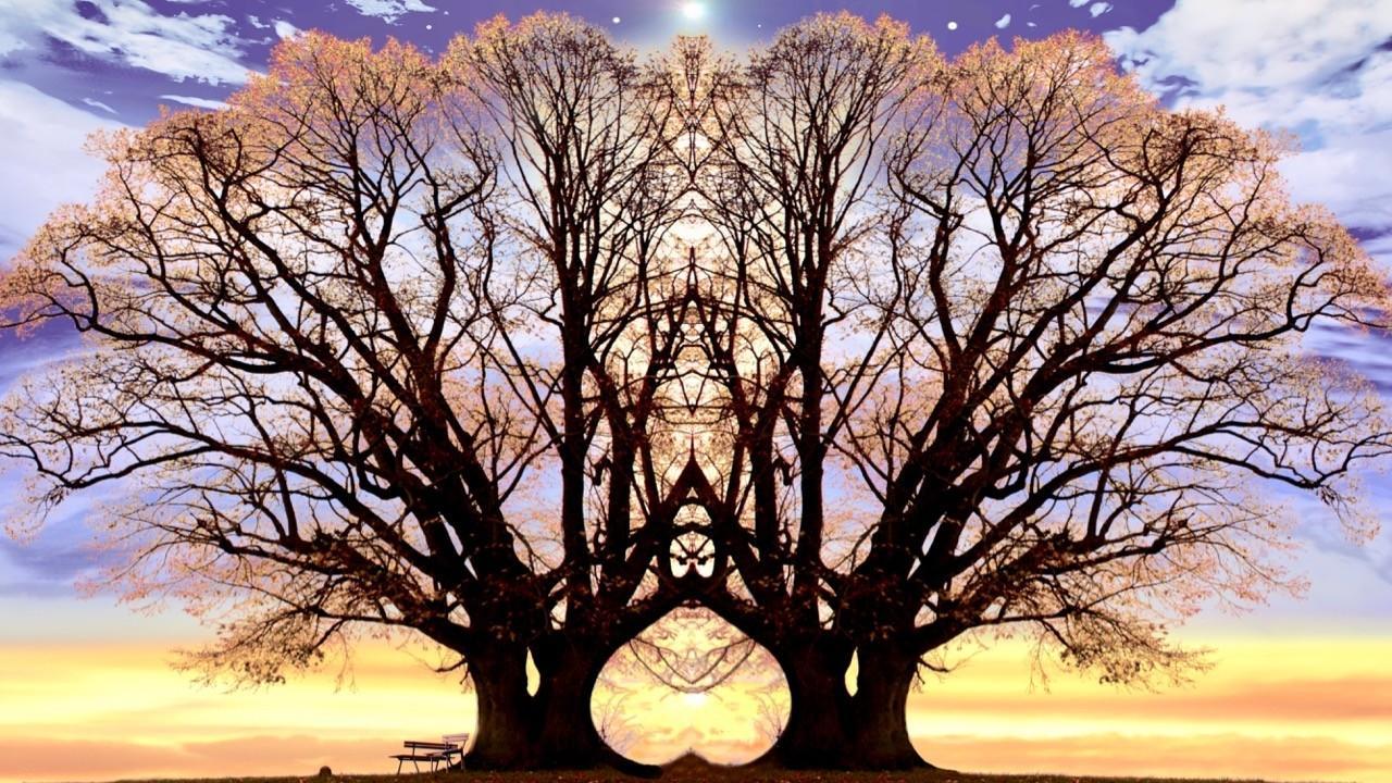 Nzngvxiht9mu5de2w9hy trees 3700486 1