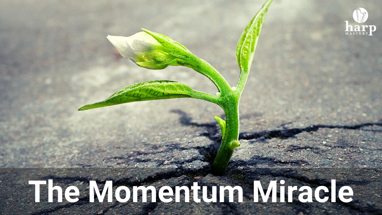 Hrcvk91krcq81gl7stbv momentum magic 2