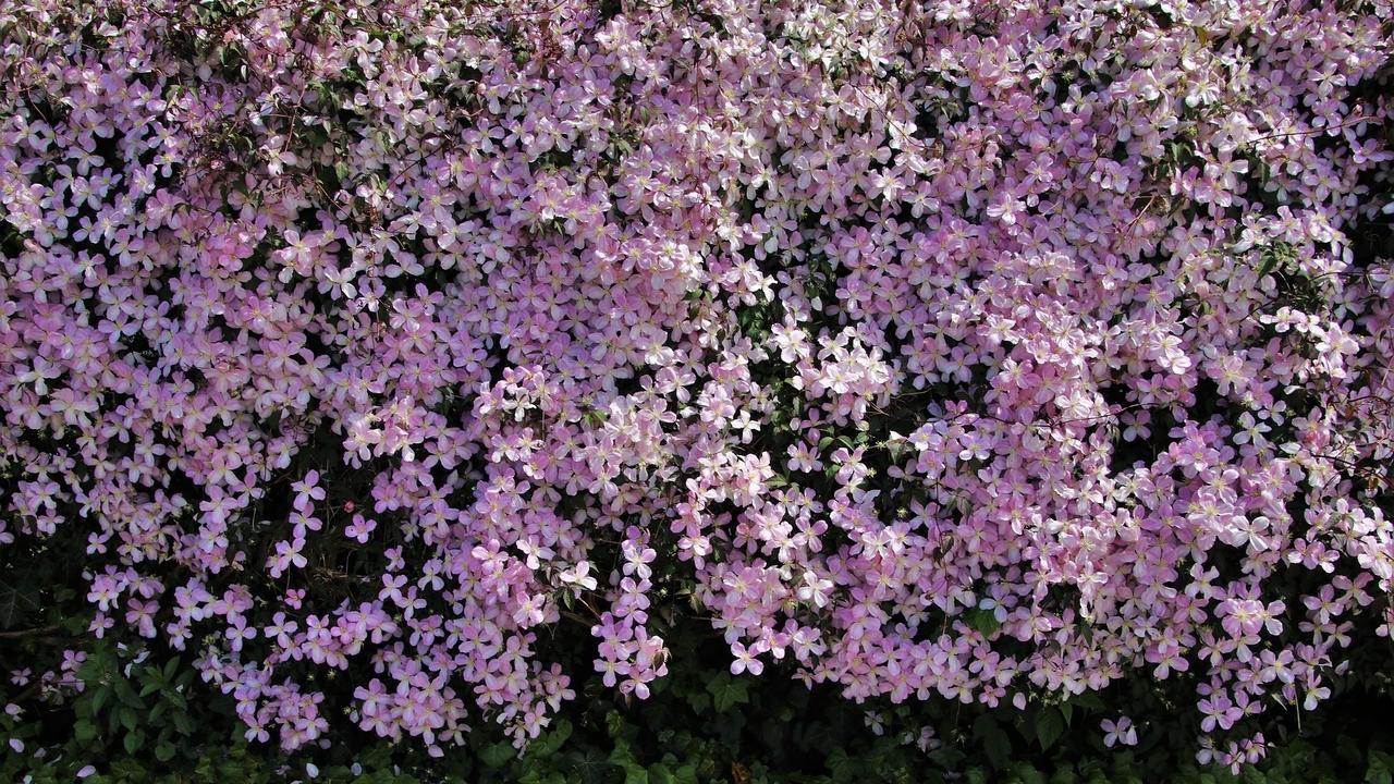 Lrfhzxl6rpop4qwb2vev blooming 4221972 1920