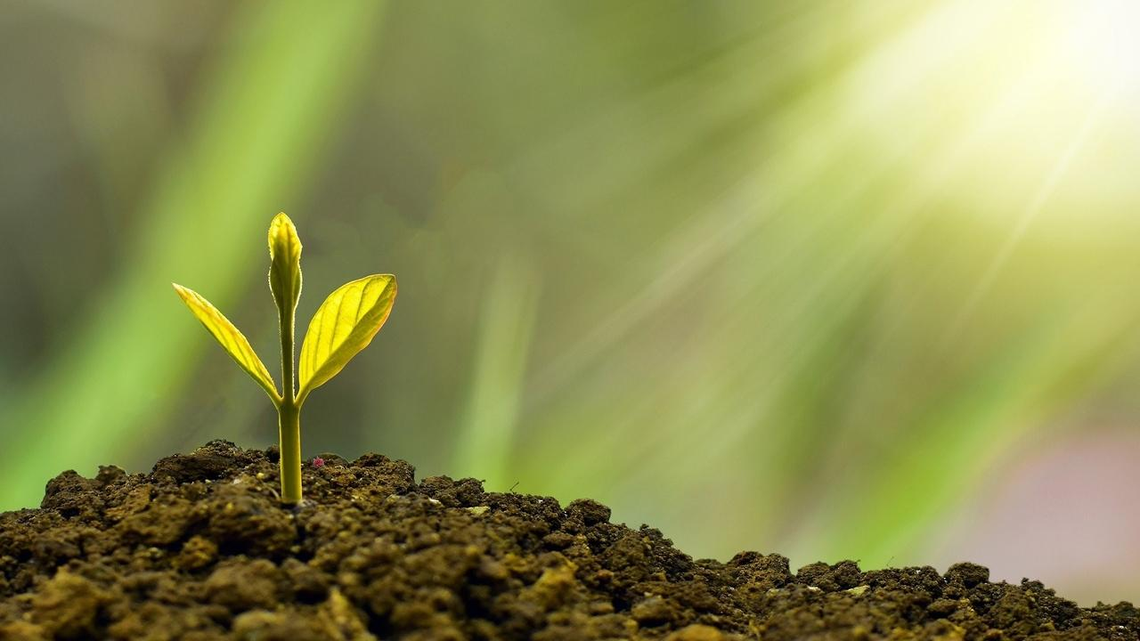 Jxv4b9zeqvsok2umjywz green seedling investment 5241253 1920