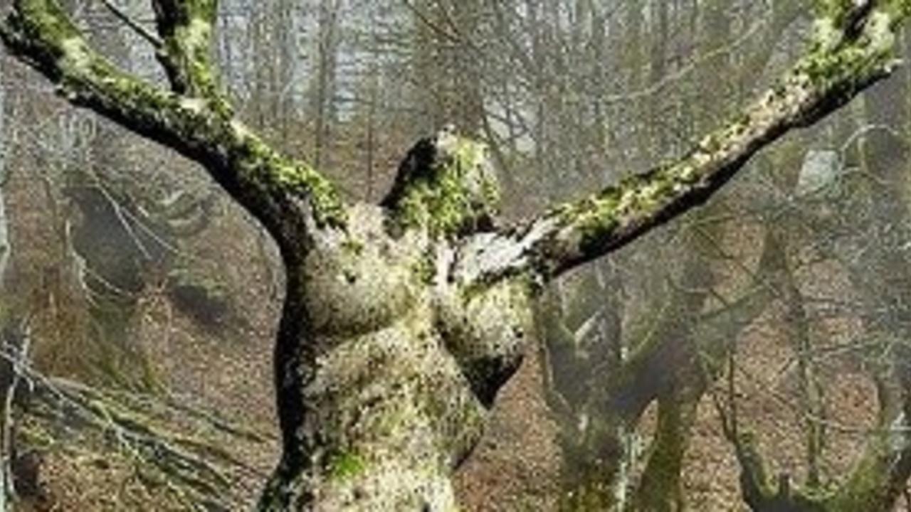 Uxccfnmargmrvc2bpc4t mother nature tree.crop