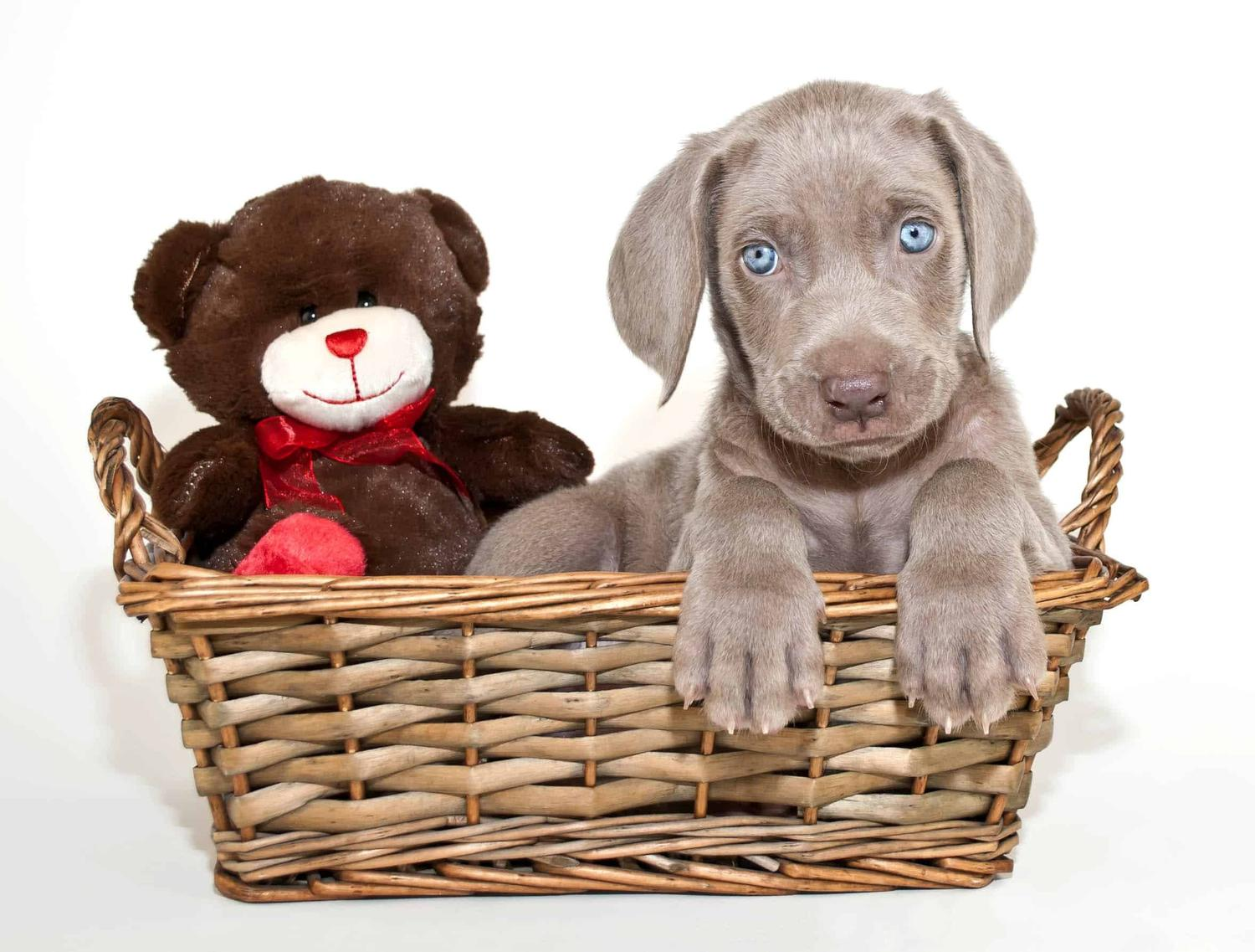 Before Your Puppy Comes Home