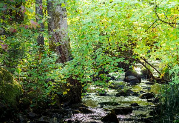 Phelp's Creek