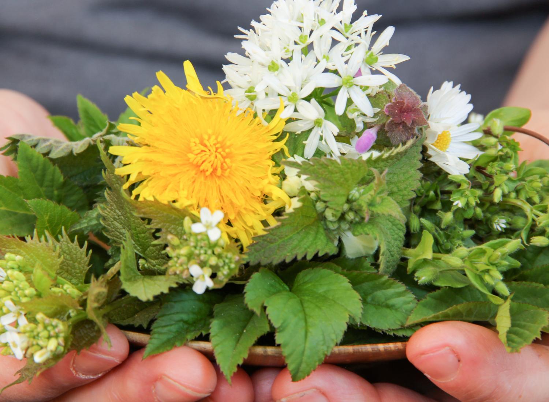 Ayurveda_Herbalist_Practitioner_Training