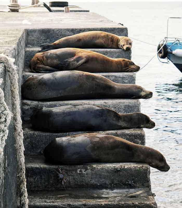 Seals on Pier