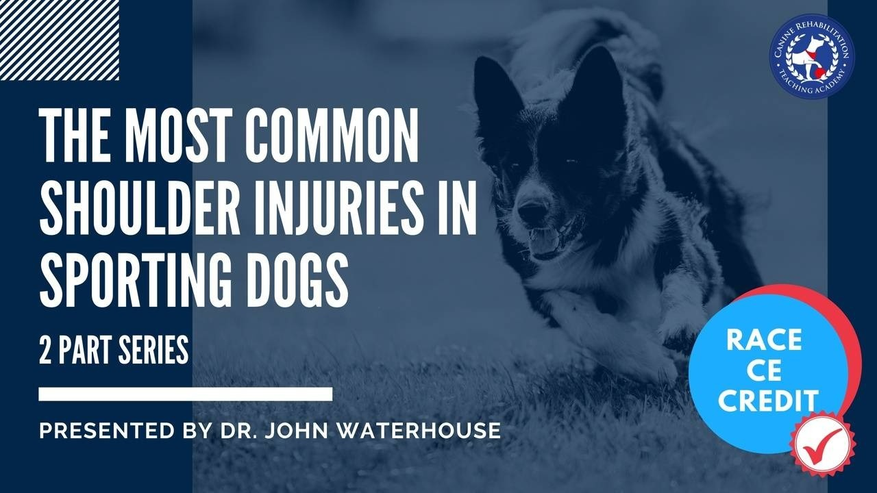 Common Shoulder Injuries in Sporting Dogs