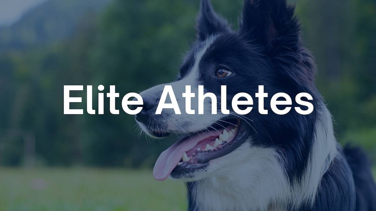 Elite Athletes