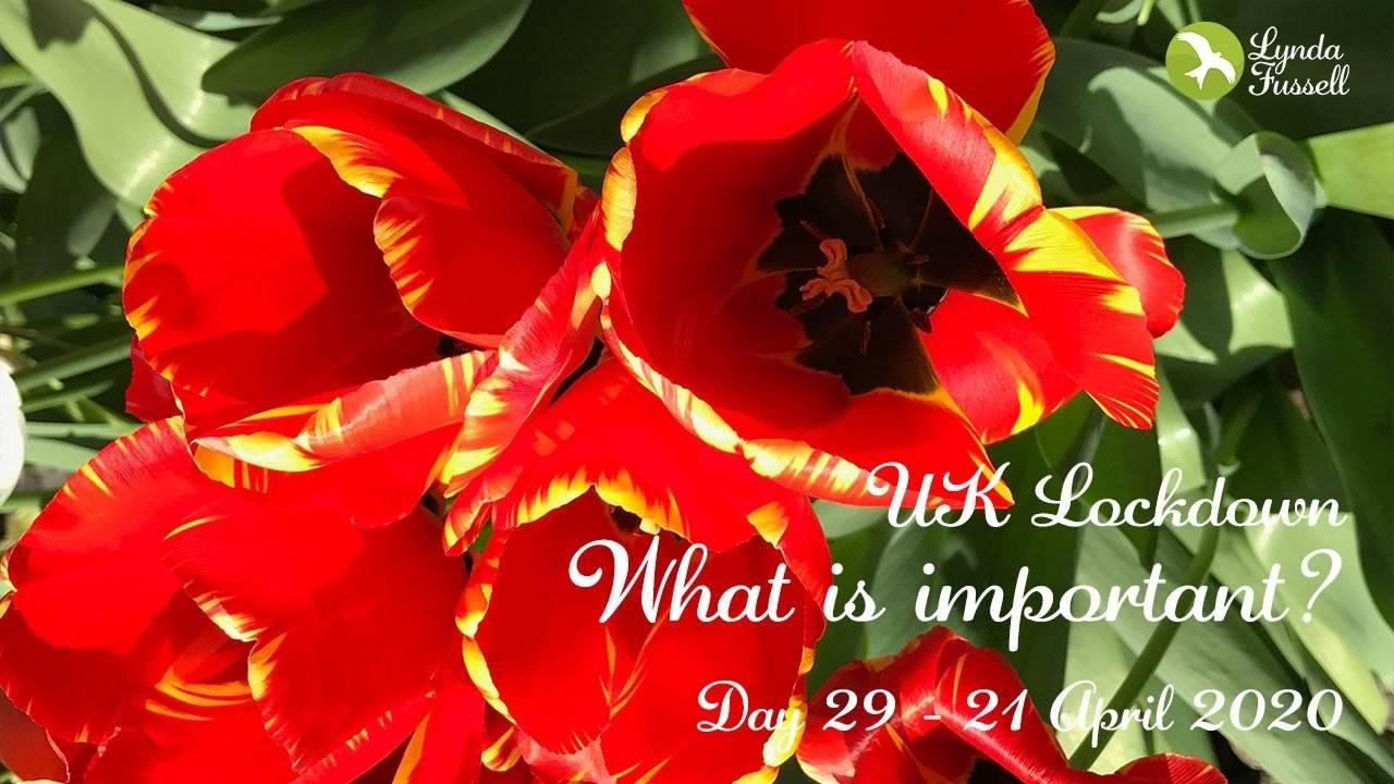 What is important? - Day29 UK Lockdown