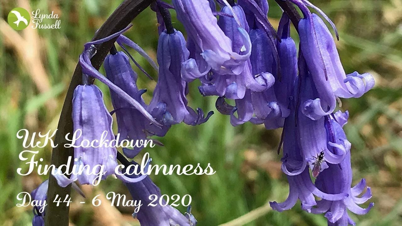 calmness with bluebells - day 44 UK Lockdown