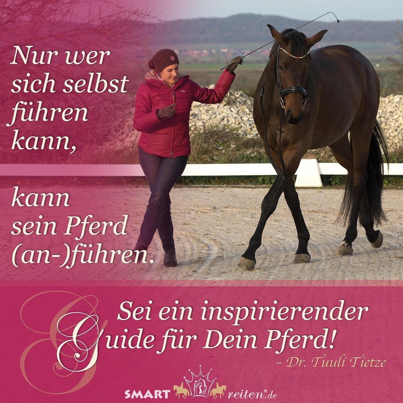 Sei ein inspirierender Guide für Dein Pferd!