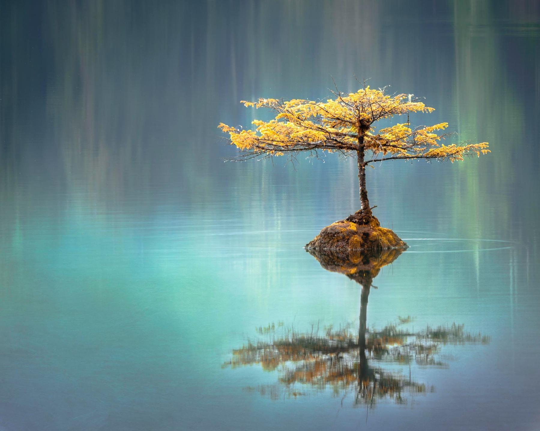 Meditation Program - Transition to the New Consciousness | Reena Kumarasingham
