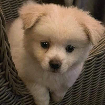 dog named Kevin